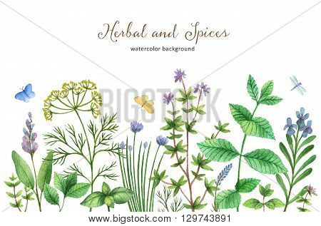 Watercolor hand painted banner with wild herbs and spices. The perfect design for greeting card, skrabbuking, menus, packaging, kitchen decor, cosmetics, natural and organic products. Background with space for text.