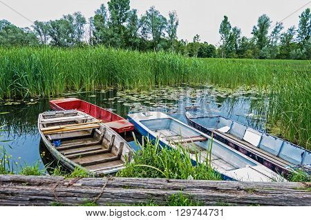 Nature reserve. Bulrush reflecting in a lake with Beautiful Lotus and Four small boats beside. Spring Trees. Untouched Nature.