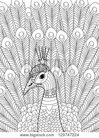Peacock coloring book for adults vector illustration. Anti-stress coloring for adult. Zentangle style. Black and white lines. Lace pattern