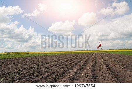 red scarecrow in field under blue sky