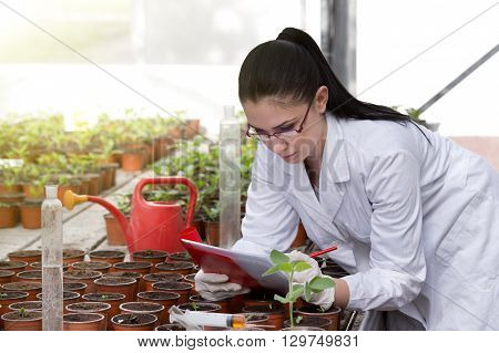 Biologist With Sprouts In Greenhouse