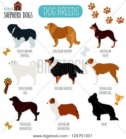 Dog breeds. Shepherd dog set icon. Flat style. Vector illustration