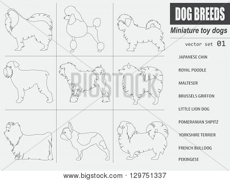 Dog breeds. Miniature toy dog set icon. Flat style. Vector illustration