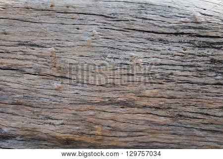 Dry Skin Wood Texture Of Aged Hardwood Background