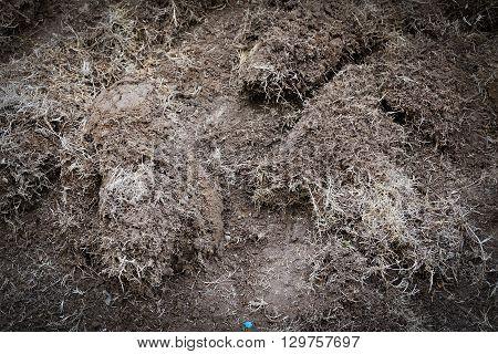 yard work preparation soil in garden with dry grass