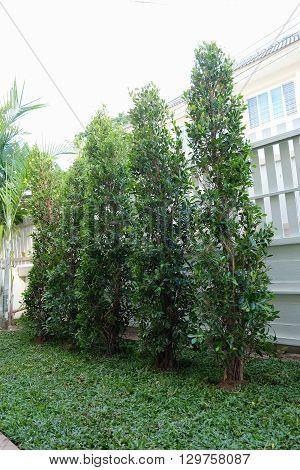 Backyard, Yard Work Planting Tree And Grass In Garden