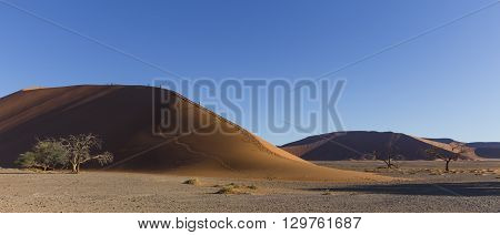 The dune 45 in the Namib Desert Sossusvlei in the Namib-Naukluft National Park of Namibia