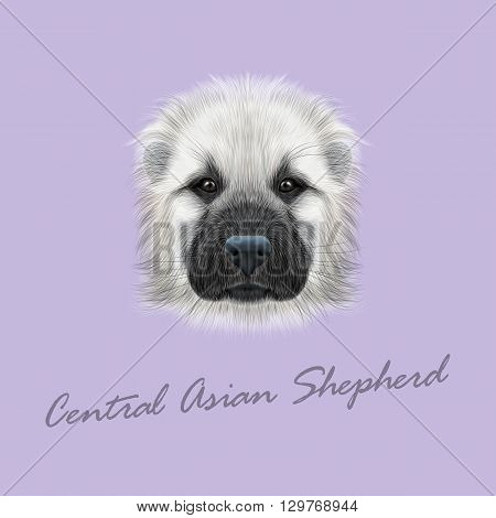 Vector Illustrated Portrait of Central Asian Shepherd Dog. Cute fluffy white face of young domestic dog on violet background.