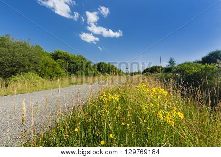 Flowers And Road Through Moor Landscape In The High Fens, Belgium