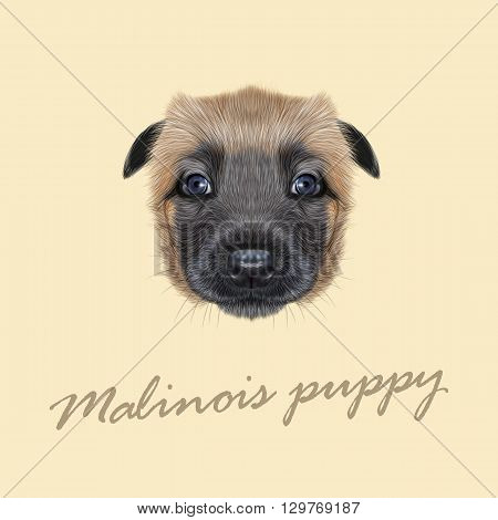 Vector Illustrated Portrait of Malinois dog. Cute face of Belgian Shepherd puppy on beige background.