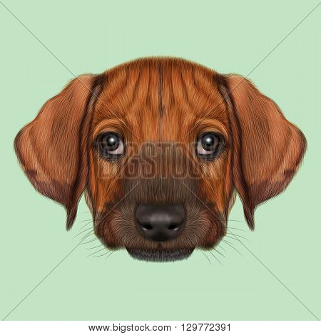 Illustrated Portrait of Rhodesian Ridgeback dog. Cute orange face of domestic puppy on green background.