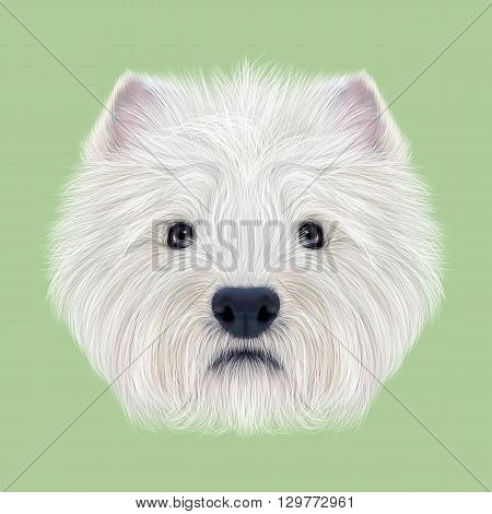 Illustrated Portrait of West Highland White Terrier. Cute fluffy white face of domestic dog on green background.
