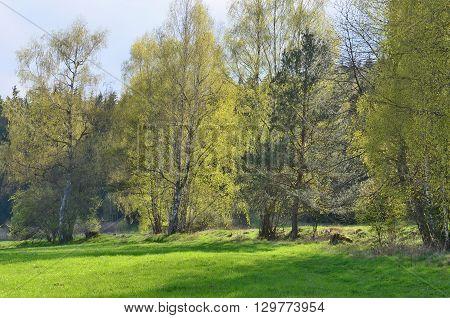 view spring landscape southern Bohemia . Czech Republic