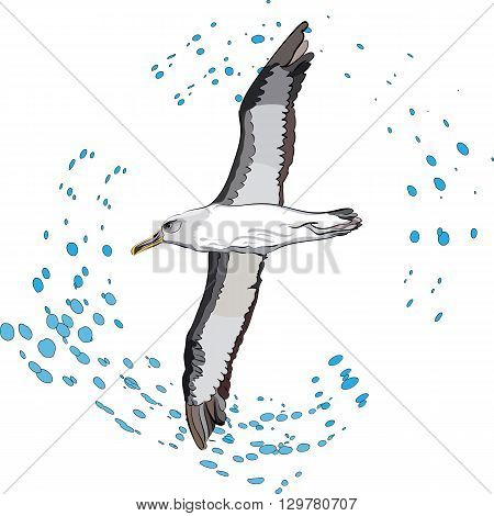vector illustration of flying sea bird and outlined drops of water