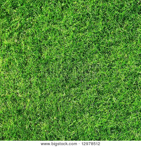 Textura de grama verde bonito