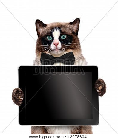 Fashionable cat holding a blank tablet.  Isolated on white.