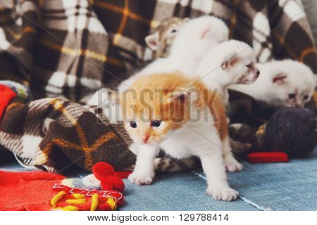 Kitten and mittens. Red orange newborn kitten near a plaid blanket. Sweet adorable tiny kitten on a serenity blue wood background play with mitten. Funny kitten crawling and meowing