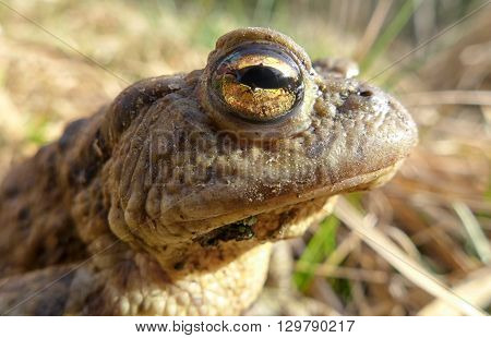 Frog - Macro View
