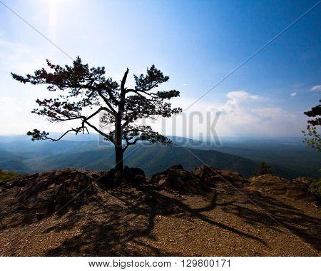Lone tree scenic on Skyline Drive Virginia