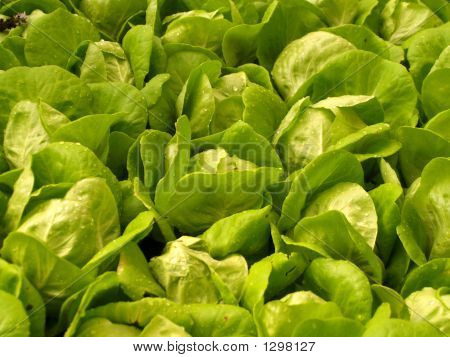 Green Vegetable