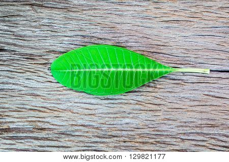 leaf on old wooden texture background .