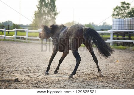 Funny Brown Horse Is Plaiyng On Sand