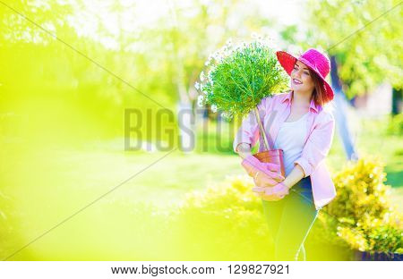 Woman wearing straw hat and gloves holding pot with blooming marguerite tree flower in the garden, gardening concept.