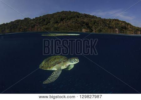 Sea Turtle below ocean surface (Half and half, over under or Split image)