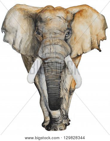 Watercolor hand drawn Elephant on white background for brochure and t-shirt, invitation card and postcard.