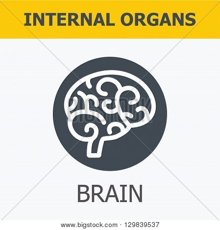 Internal organs - brain. Family and a healthy lifestyle. Medical infographic icons, human organs, body anatomy. Vector icons of internal human organs Flat design. Internal organs icons.