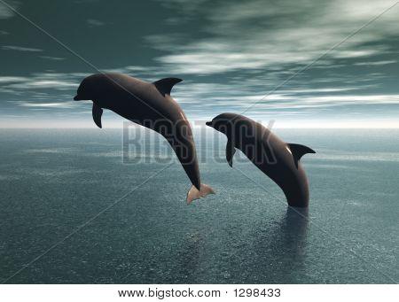 Delphine spielen