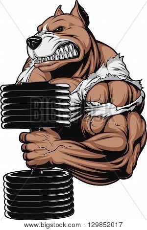 Vector illustration of a ferocious pitbull raises the dumbbells on biceps