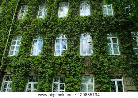 old green  building is overgrown with vines.