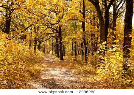Footpath among yellowed trees in autumnal park