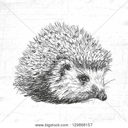 Hedgehog wild animals. See also the other sets of animals.