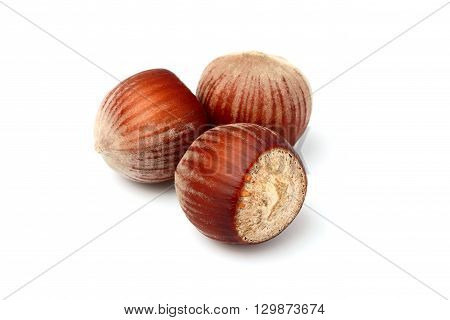 Hazelnut isolated on a white background closeup.
