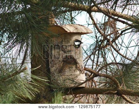 bird tit and birdhouse on tree background