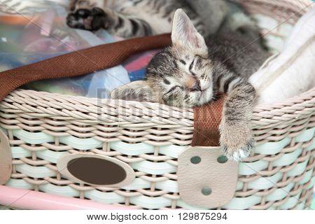 gray tabby kitten sleeping in a basket