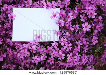 a nice white paper with purple flowers