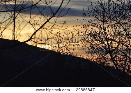 Luz del atardecer en una colina tras los arboles