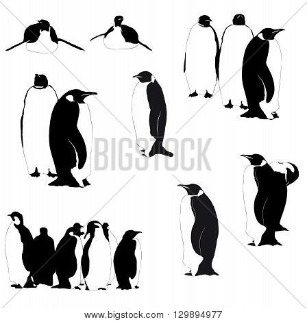 Collection of Vector Emperor penguins silhouettes on the white