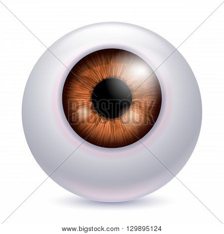 Human eyeball iris pupil isolated on white background - Brown color. Brown eye realistic vector illustration.