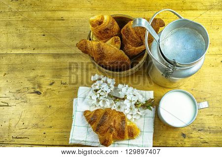 Aluminum milk can with organic milk and fresh baked croissants in the green spring garden