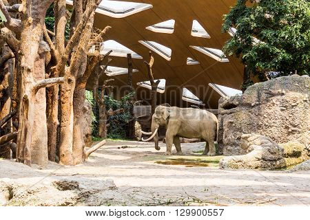 View Of Elephants In New Compound In A Zoo