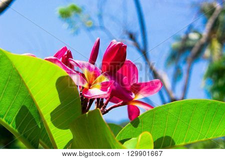 Hill Garden Tropical Verdure