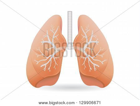 Human lung vector. Illustration about human internal organ.