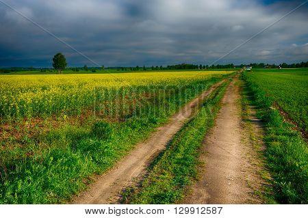 The road leading through the rape fields. HDR image. Masuria Poland.