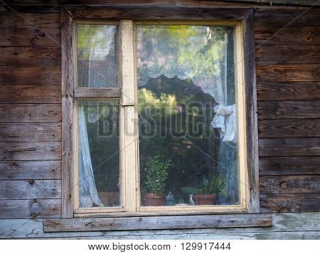 Window of country house. Wooden house, window, indoor plants, curtains, trees reflected in the glass. View oknnoy frame from the street