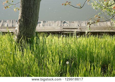 Grassblades closeup on a lakeside