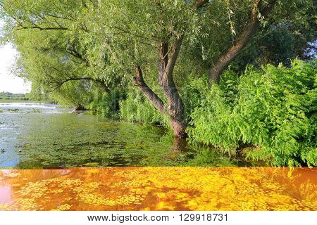 Calm lake surface with plants